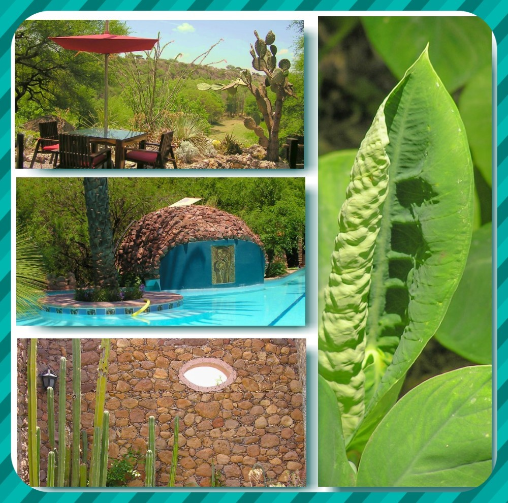 Nirvana is a secluded, romantic and sophisticated dining oasis in San Miguel de Allende, Mexico.