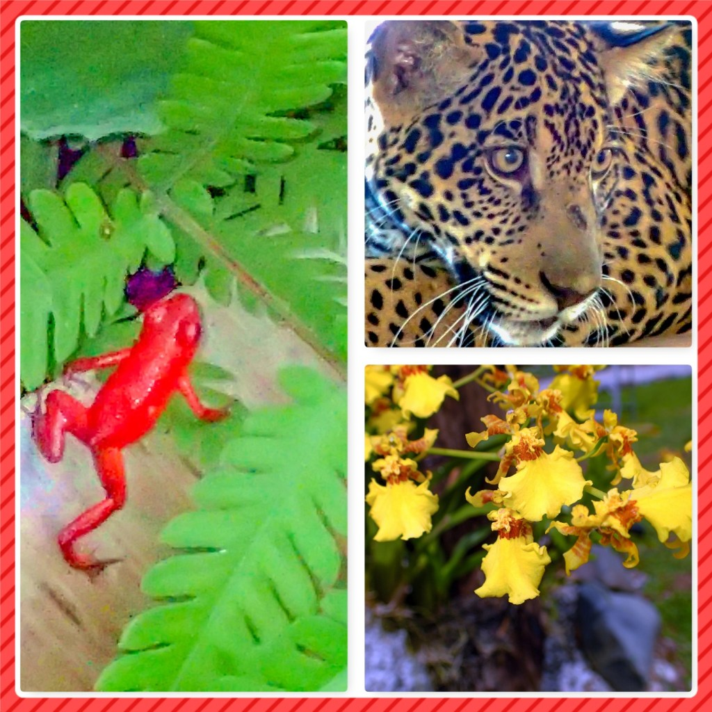 Collage of jaguar, poison dart frog and orchid.