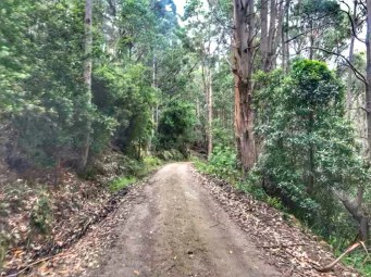 Forest road trail of Lachlan