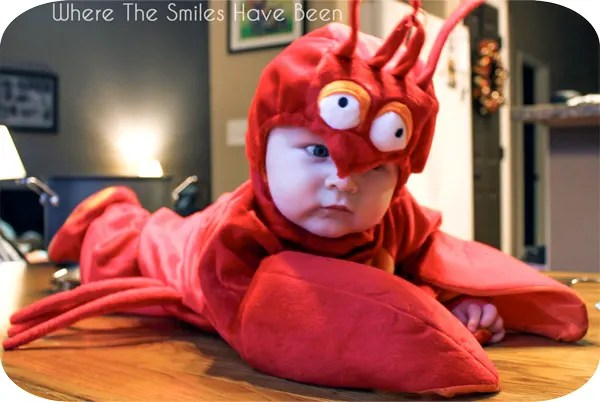 Halloween Baby Lobster Costume |Where The Smiles Have Been