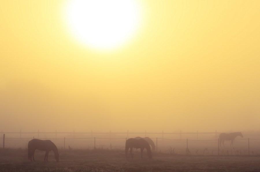 Horses in Fog Illinois William Woodward