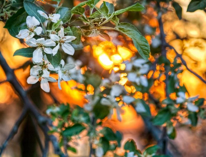 Spring Flowers Illinois William Woodward