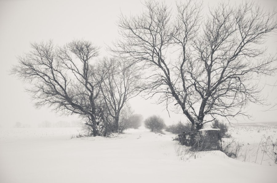Winter Whiteout 1 Illinois William Woodward