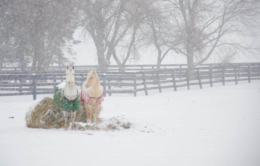 Winter Wightout 3 Illinois William Woodward