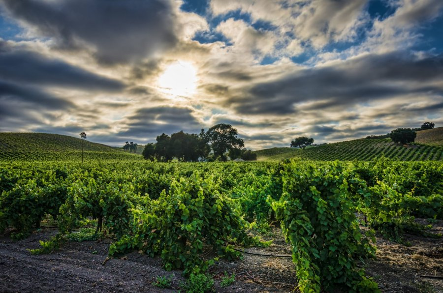 Fields Paso Robles William Woodward