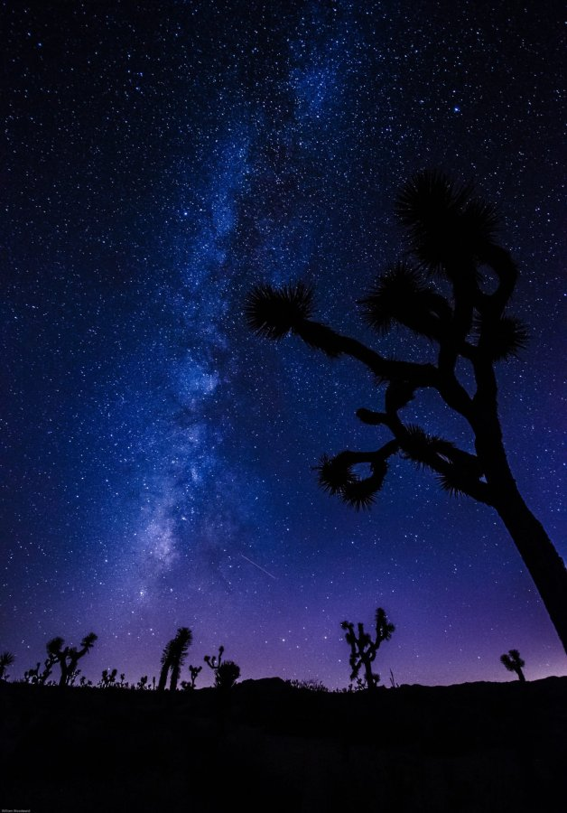 Stars Joshua Tree William Woodward