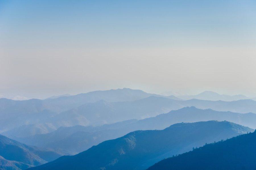 Blue Sequoia's Park William Woodward