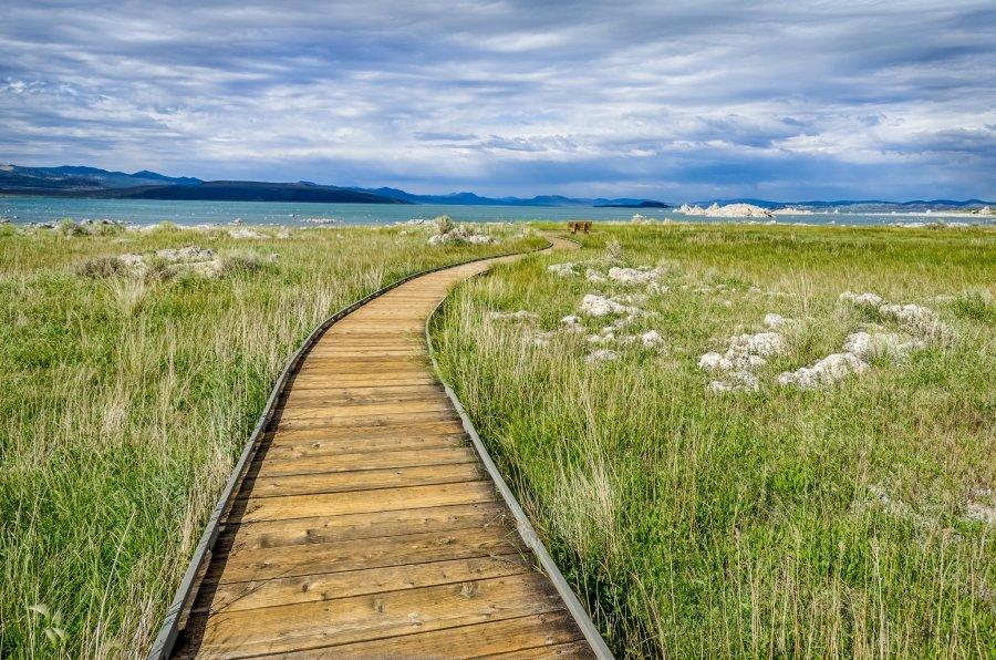 Mono Lake William Woodward