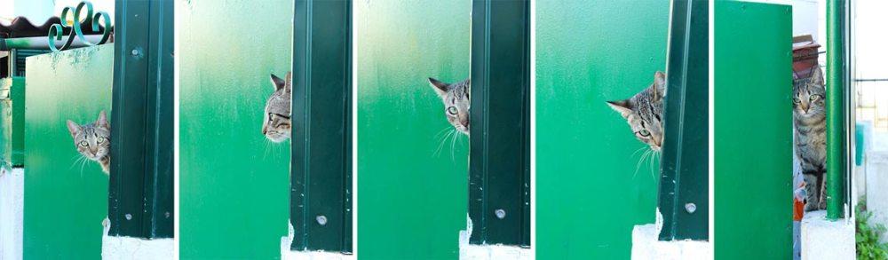 Cat in Cova do Vapor
