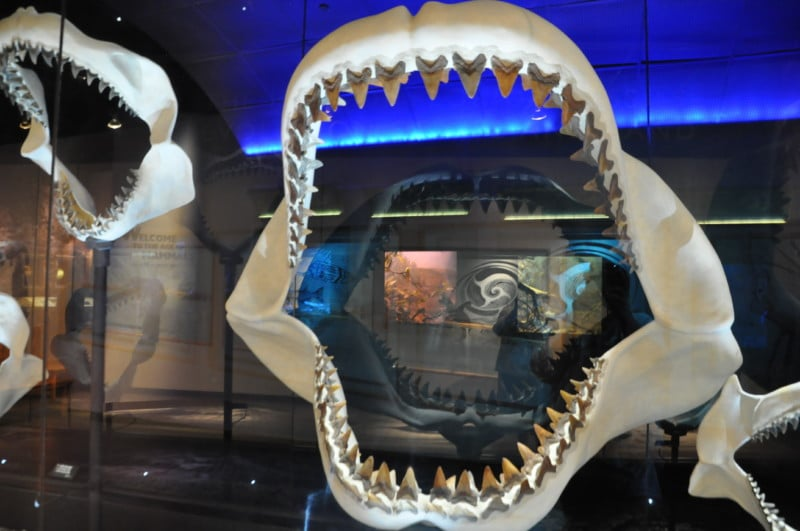 The Florida Museum of Natural History is one of the top things to do in Gainesville.