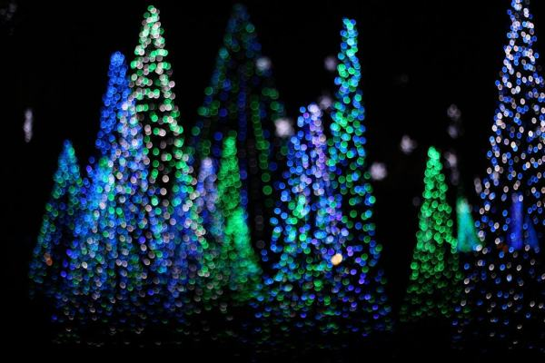 Christmas trees made of blue and green lights