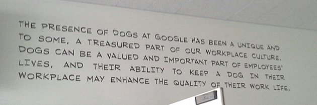 Google is dog friendly