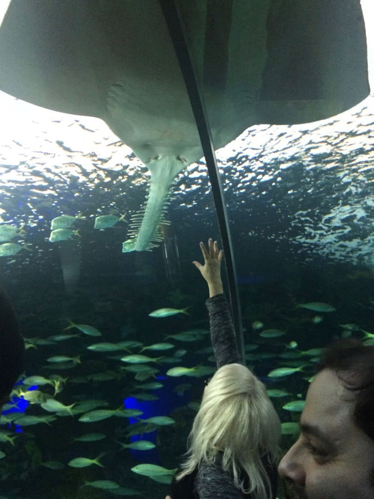 Cheap things to do in Toronto - Ripley's Aquarium