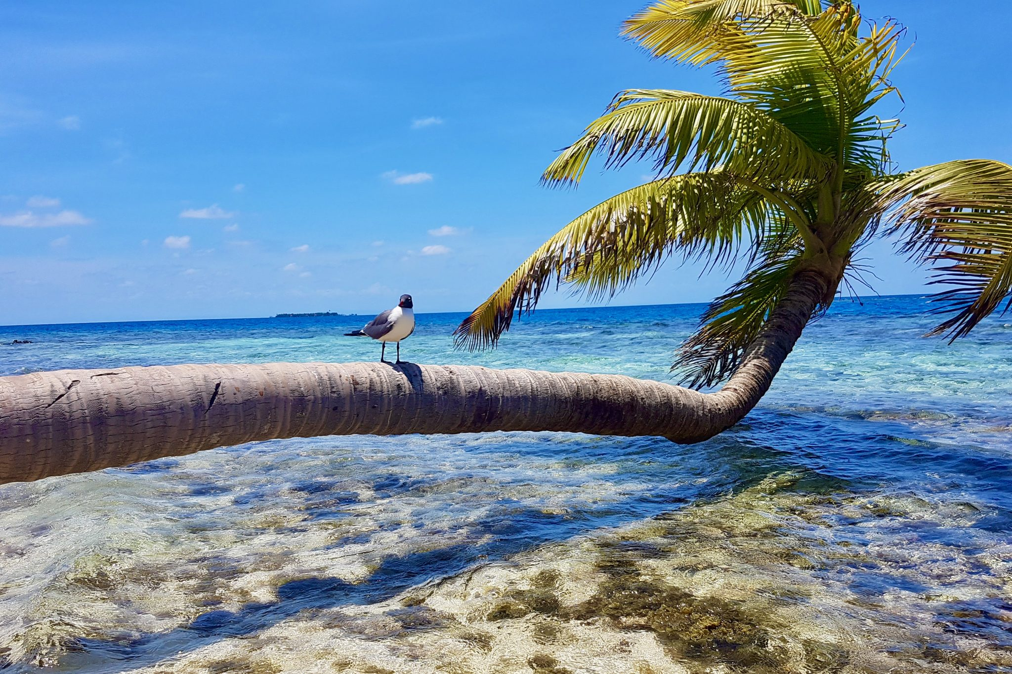 Best Way to Spend 2 Weeks in Belize – San Ignacio, Placencia, and Caye Caulker