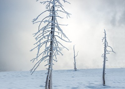 Three Trees in the Mist and Snow