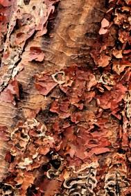 bark by Kathleen Dodds