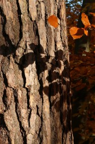 shadows on bark