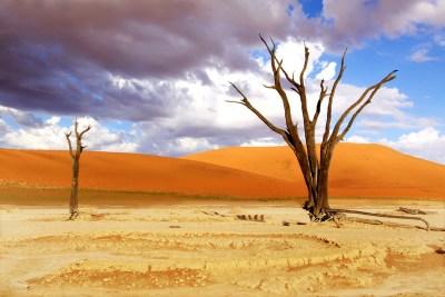 ( Deadveli of Dead Vlei Trees Namibia )
