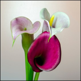 03 Lily Triplet