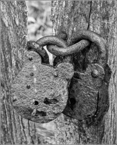 07 Sharing Lockdown