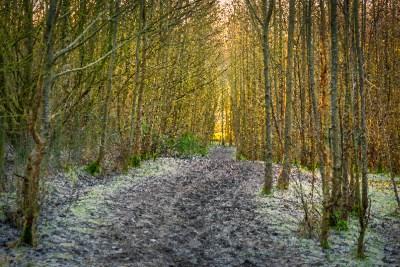 Skerningham woods abstract