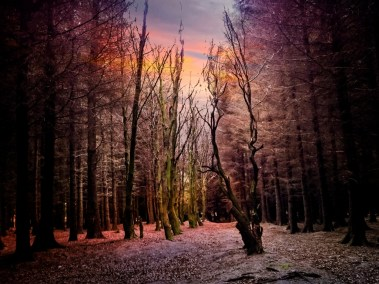 Plantation Woods