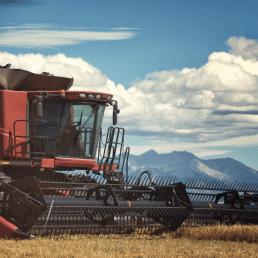 An Heirloom Grain farm in Denver Colorado for Laws Whiskey House