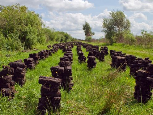 A peat farm in Scotland that will be used to make peated scotch.