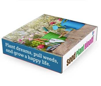 seed plant bloom