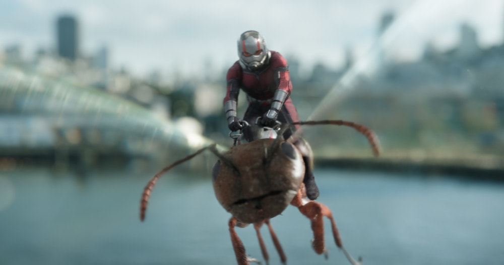 Ant-man flying on an ant - Ant-Man and the Wasp