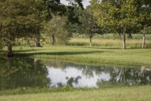 pond and beyond