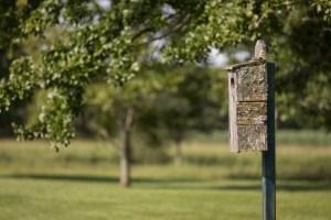 local residents - bird house