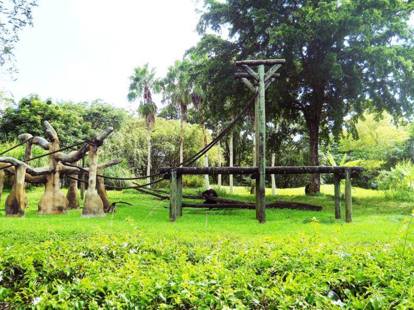Monkey Zoo Miami