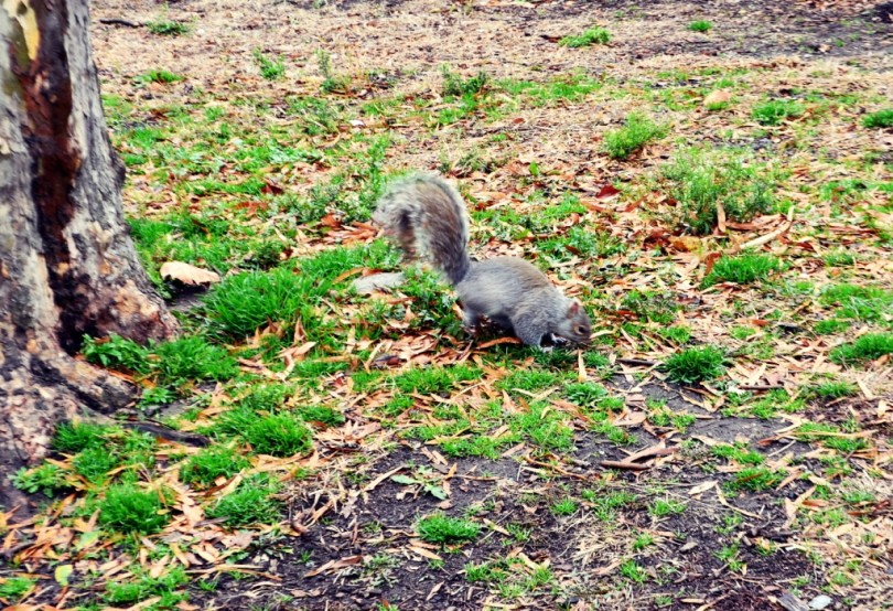 Squirrel Central Park NYC