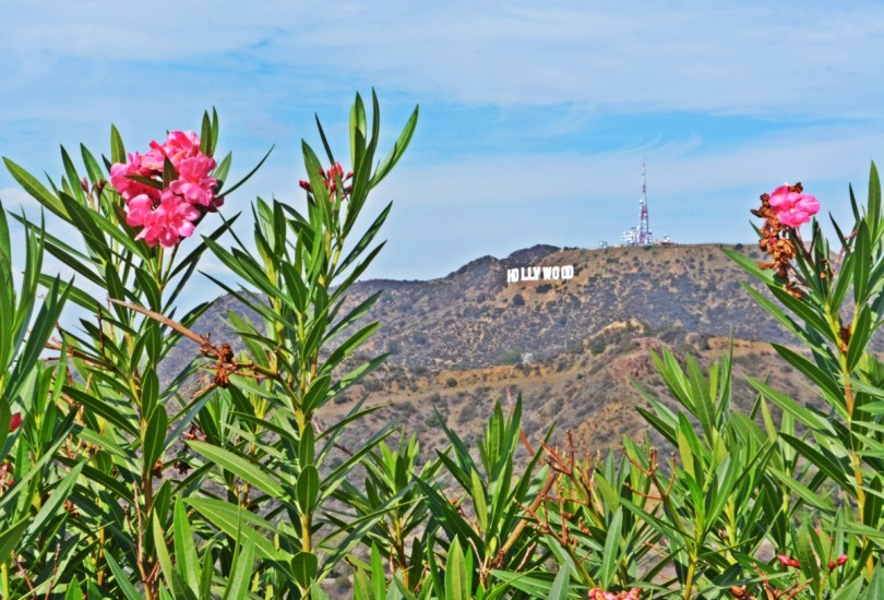 hollywood-sign-view