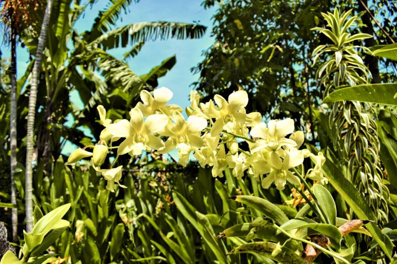 bali orchid garden