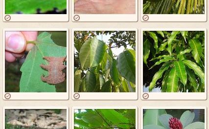 Project Noah : Document and Share Nature Photographs
