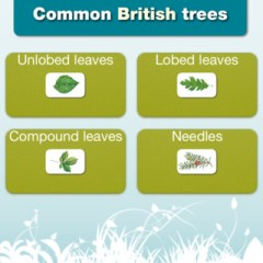 British Bug and Plant Identification iPad Apps from the FSC