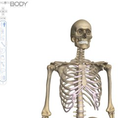 Zygote Body – Interactive Human Body Browser for your Whiteboard