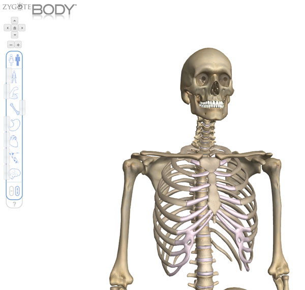 Zygote Body Interactive Human Body Browser For Your Whiteboard