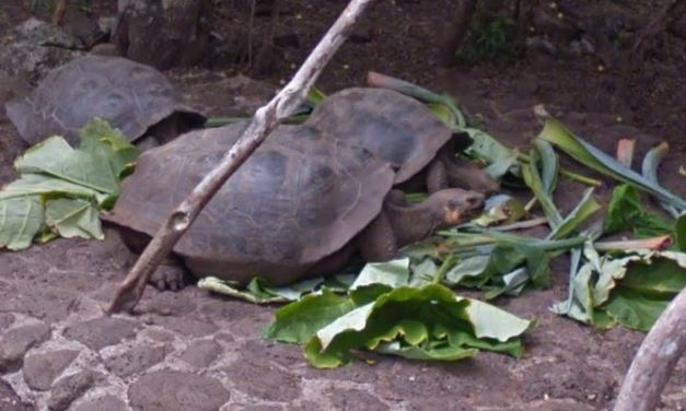 Walk in Darwin's Footsteps with Galapagos Islands Street View