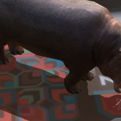Bring a Hippo into the Classroom with ZooKazam