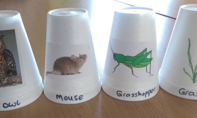 Science Teaching Idea : Food Chains With Stackable Cups