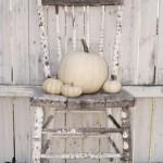 Celebration: Happy Thanksgiving!