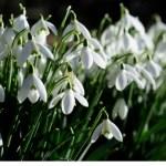 Blooming April