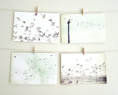 lupen-Grainne-bird