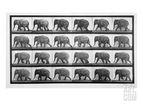 eadweard-muybridge-elephant-walking-plate-733-from-animal-locomotion-1887-b-w-photo-_i-G-64-6497-O8Y6100Z