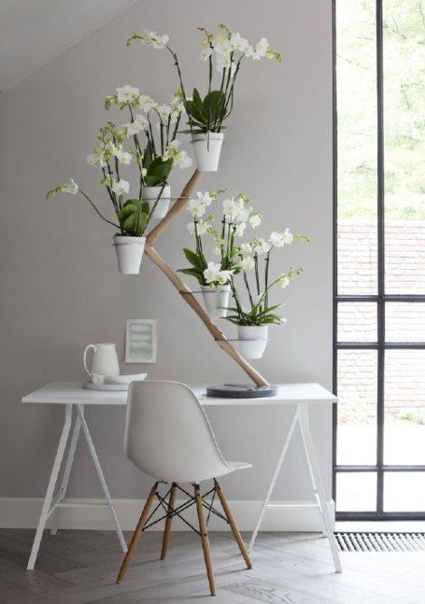 droomhome_orchidee_etagere_orchid_twister_francois_hannes_wit_plant_potten