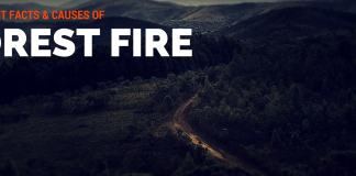 what is forest fire?