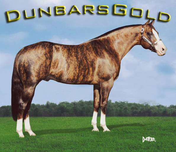 Image result for brindle horse